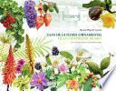 Guia de la flora ornamental de la Universitat Jaume I. Un Campus per a la biodiversitat